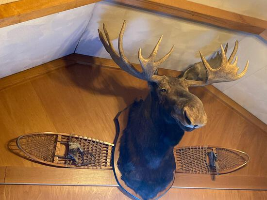 Moose mount with snowshoes