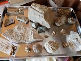 Fossils - Rocks - Assortment