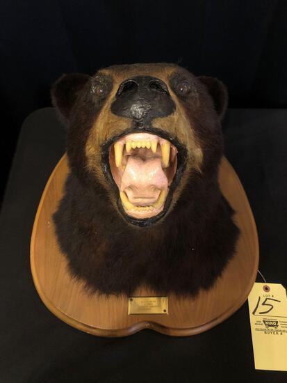 Black Bear Head Mount