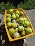Basket of softballs