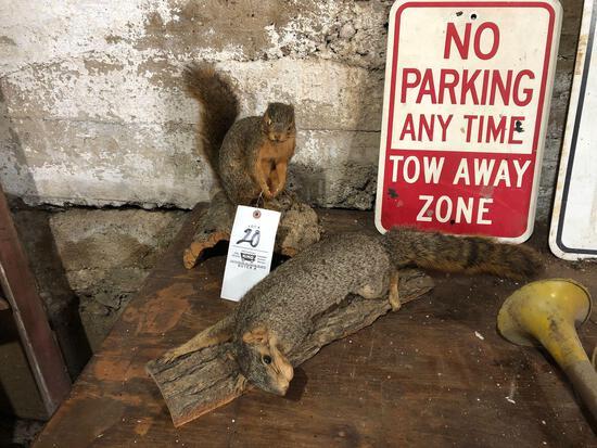 (2) squirrel mounts