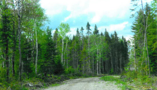 Huge Opportunity to own 170 Acres with Snowmobile Trail ON US/CANADA BORDER!  Limestone, Maine