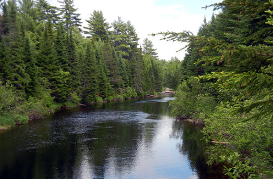 Hop, Skip and a Jump to the Aroostook River!