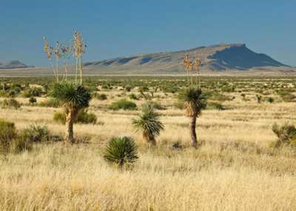 40-Acre Scorpion Ranch in West Texas NEAR GOLF!