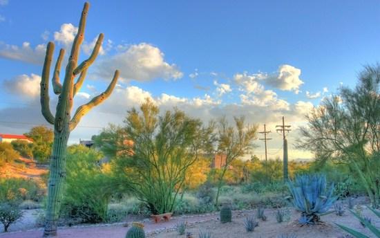 25+ Majestic Arizona Acres!