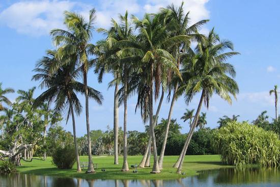 Live Near Amazing Beaches in Peaceful Port Charlotte, FLORIDA!