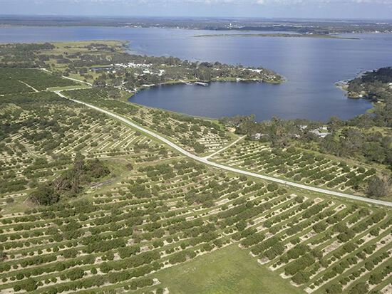 1.25 Acres in Polk County in the Sunshine State!