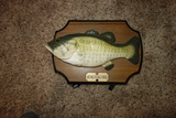 Big Mouth Billy Bass Wall Animated Hanging Fish