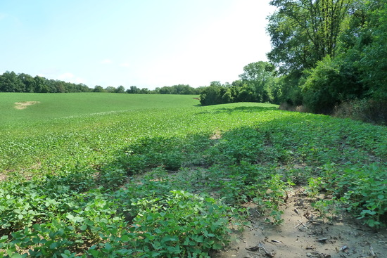 35.77 Acres in South Haven, MN