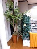 Artificial Tree's & Plants