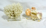 2 Piece Coral On Lucite Stands