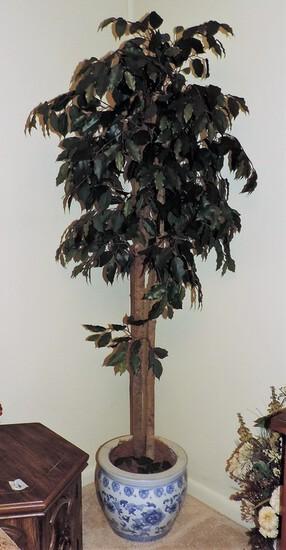 Ficus Tree In Oriental Planter