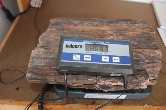 46.6 Pound Piece of Petrified Wood