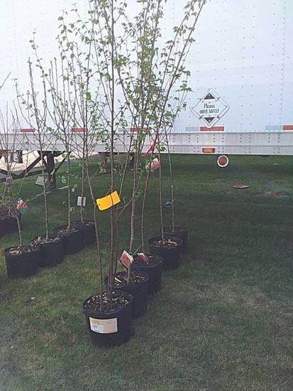 (5) Mixed Fruit & Shade Trees