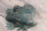 Metal Frog.