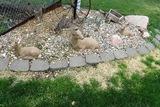 Set of 3 Concrete Deer.