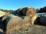 (91) 2019 Grass Hay Round Bales (Approx. 2,000 lbs. per Bale).
