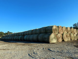 (323) 2019 Grass Hay Round Bales (Approx. 2,000 lbs. per Bale).