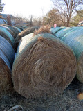 (10) 2019 Grass Hay Round Bales (Approx. 2,000 lbs. per Bale).