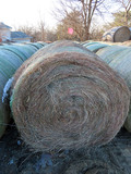 (9) 2019 Grass Hay Round Bales (Approx. 2,000 lbs. per Bale).