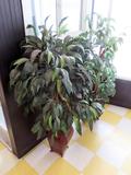 (2) 5' Silk DŽcor Plants.