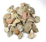 Several Fossil Rocks From South Dakota