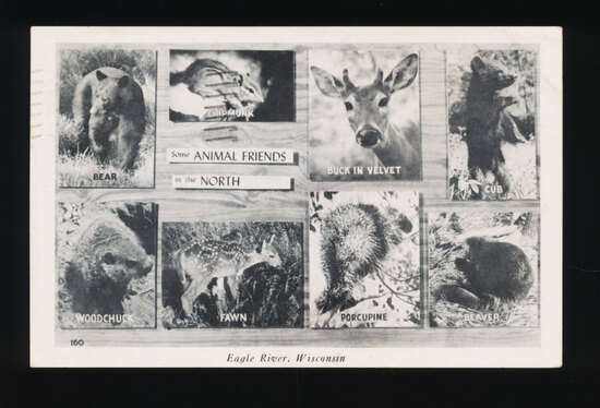 1947 EAGLE RIVER:  Some ANIMAL FRIENDS in the North.  SIZE:  Standard; COND