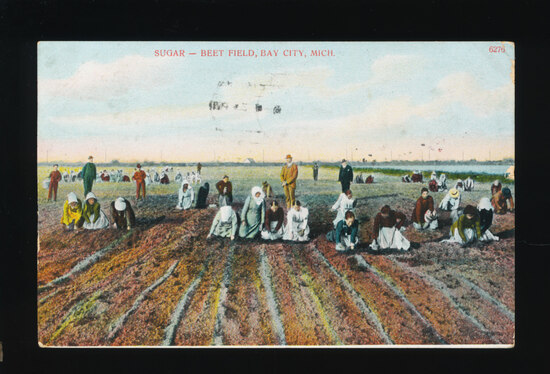 1912 Sugar Beet Field, Bay City, Mich.  Lots of workers, Mostly Gals; a Bun