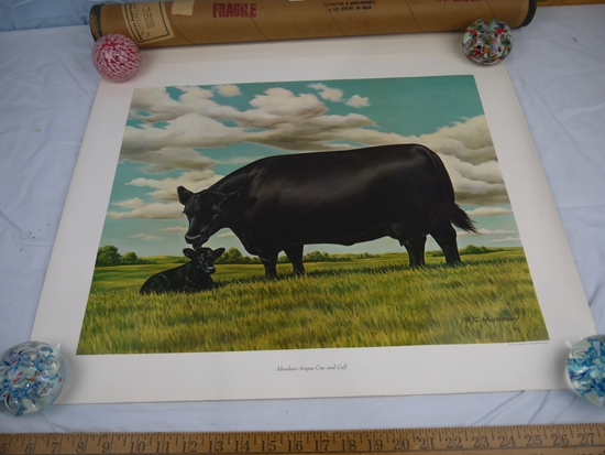 (3) prints: Aberdeen-Angus by F.C Murphy for 1961 American Angus Association
