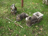 3 cement yard animals:  squirrel, raccoon, donkey with cart (ear is rough)