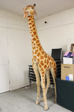 German Steiff Studio Giraffe, 8 Foot Tall, Jointed