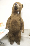 German Steiff Studio Large Brown Bear, 6 ft Foot