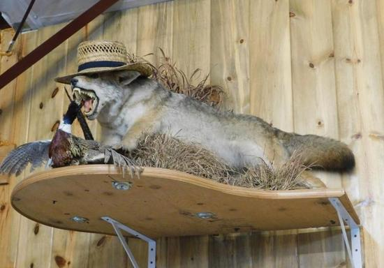 Coyote and pheasant taxidermy