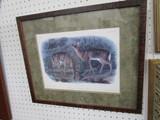 2 Deer Pictures