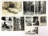 1940s Black & White Sequoia & Yosemite Photos