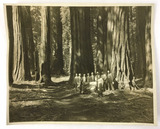 Original Dedication Photo Sequoia National Park