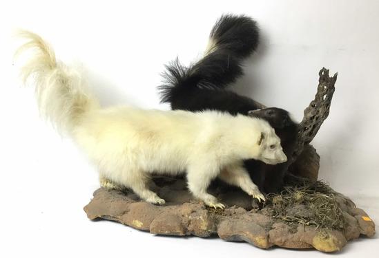 Pair Of Full Mount Taxidermy Skunks
