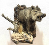 Taxidermy Javelina Wall Mount On Desert Scene