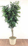 90in Faux Pot Planted Tree